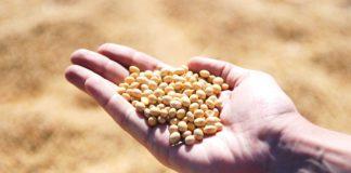 Argentina zachraňuje trh se sójovými boby. Stát převezme největšího exportéra sóji